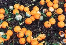 πορτκαλια